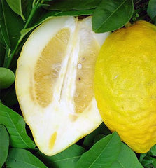 Lemon Cedrat Extract
