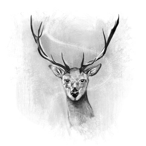 Black and Grey Deer