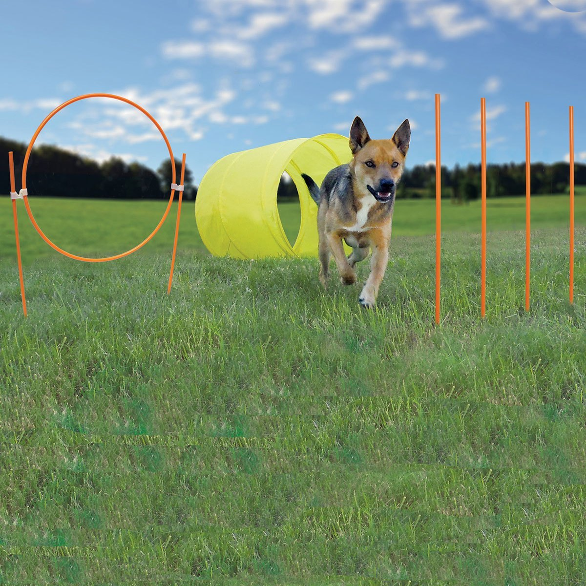 Agility Starter Kit with Hoop & Tunnel - BowWowAgility