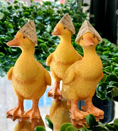 Baby ducks in newspaper hats