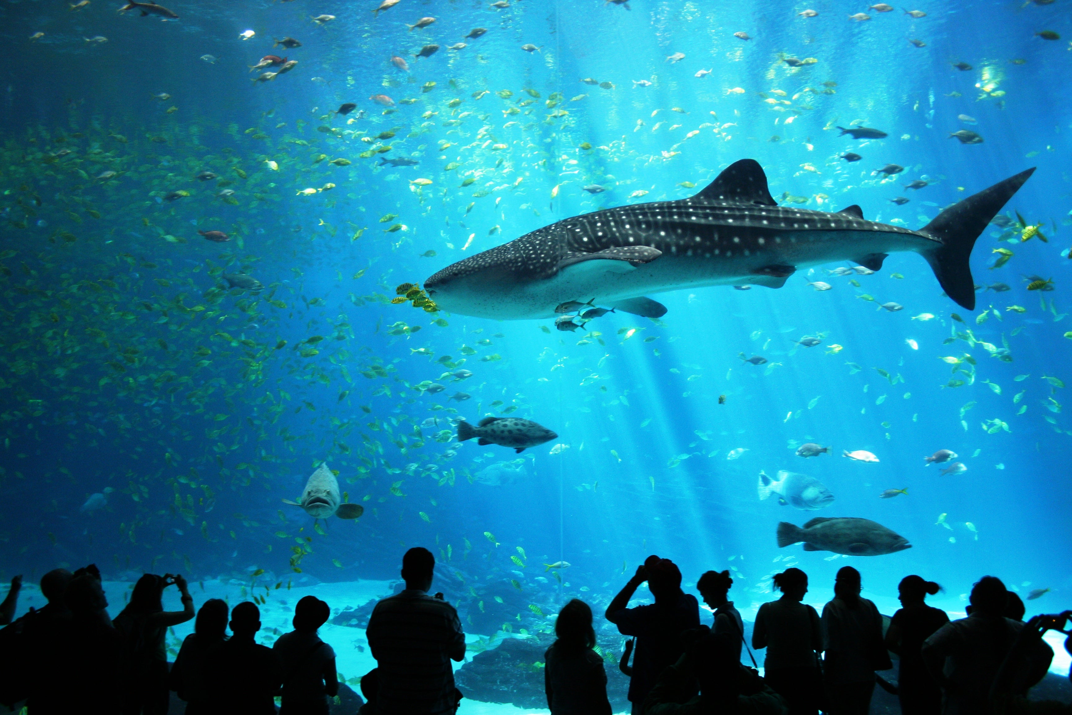 Diverse Rich Sea Life Ocean Aquarium