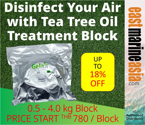 Disinfect Your Air with Gelair Tea Tree Oil Block