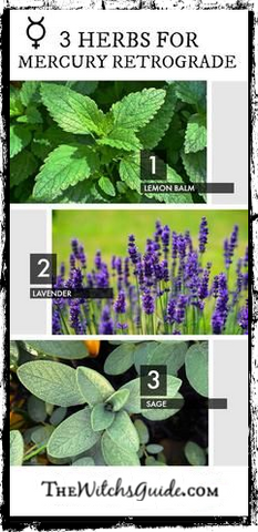 3 Herbs for Mercury Retrograde, Green Witchcraft, The Witch's Guide