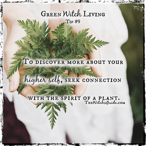 Green Witch Living Tip, Living the Life of a Green Witch, Green Witchcraft, The Witch's Guide