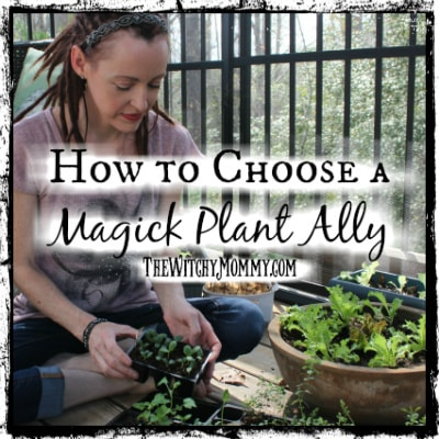 How to Choose a Magick Plant Ally, Starting Seeds, Crafting Magick Tip