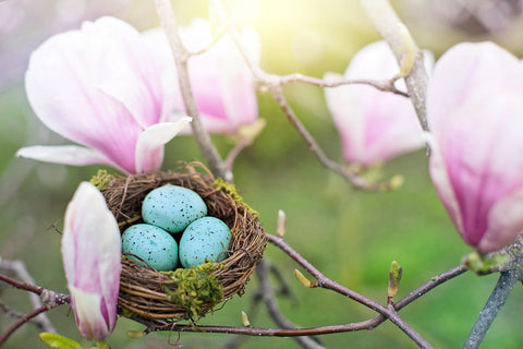 Spring Bird Nest, 7 Ways to Celebrate Ostara, Spring Equinox, The Witch's Guide