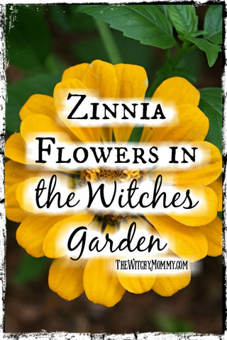 Zinnia Flowers in The Witches Garden, Crafting Magick Tips