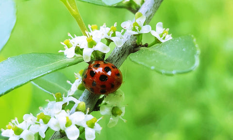 Ladybug Spirit Animal: Crafting Magick Tip - The Witchy Mommy