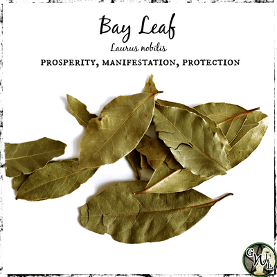 Bay Leaf for Prosperity, Manifestation, Protection, Witchcraft Herbs, The Witch's Guide
