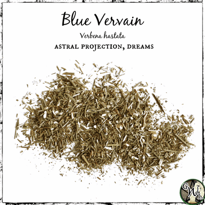 Blue Vervain for Astral Travel, Projection, The Witch's Guide, Witches Apothecary