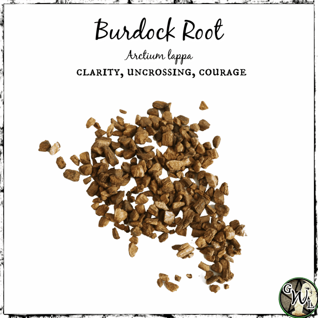 Burdock Root for clarity, uncrossing, and courage, witchcraft herbs, The Witch's Guide
