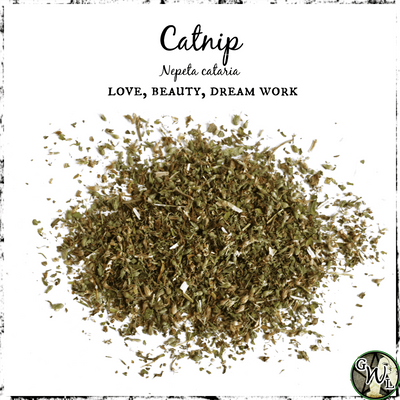 Catnip Herb for Love, Beauty, Dreams