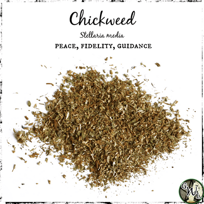Chickweed Herb for Peace, Fidelity, and Guidance