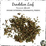 Dandelion Leaf for Psychic Intuition, Necromancy, Visions, The Witch's Guide