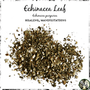 Echinacea Leaf for Healing, Manifestation, The Witch's Guide