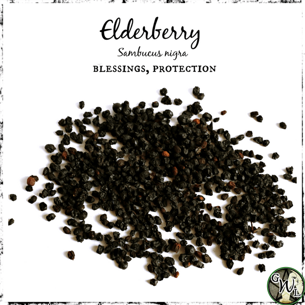 Elderberries for blessings and protection, The Witch's Guide, Witchcraft herbs