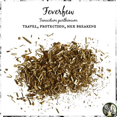 Feverfew Herb for Safety, Travel Protection, Hex Breaking, The Witch's Guide