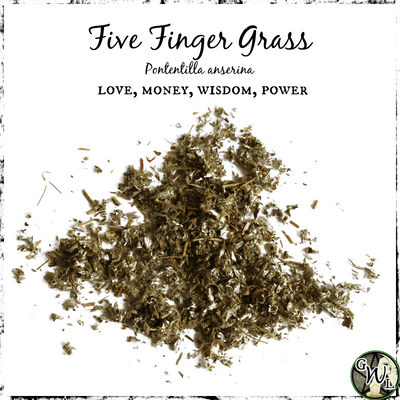 Five Finger Grass for Love, Money, Wisdom, Power, The Witch's Guide