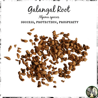 Galangal Root for Success, Protection, Prosperity, The Witch's Guide