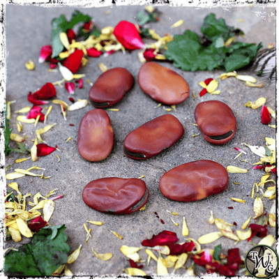 Mojo Wishing Beans, Set of 7 | St. Joseph Natural Talisman, Good Luck