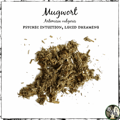 MUGWORT Herb | Psychic Intuition, Lucid Dreaming