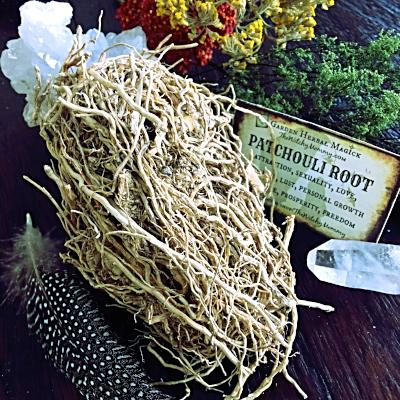 Patchouli Root, Herb