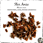 Star Anise for protection, luck, and psychic awareness, witch amulet, The Witch's Guide