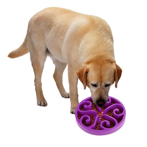 dog with purple bowl