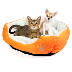 yellow dog bed
