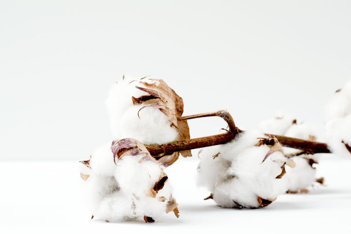 Why We Only Use Organically Grown Cotton