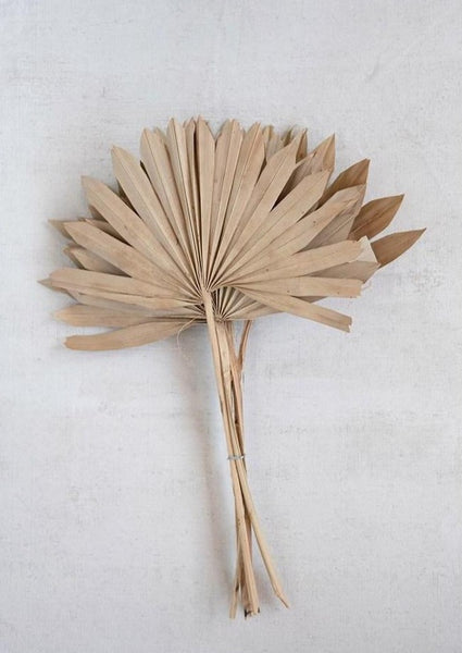 Dried Natural Sun Palm - Macy Carlisle