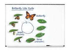Giant Magnetic Butterfly Life Cycle|Grand cycle de vie magnétique - papillon