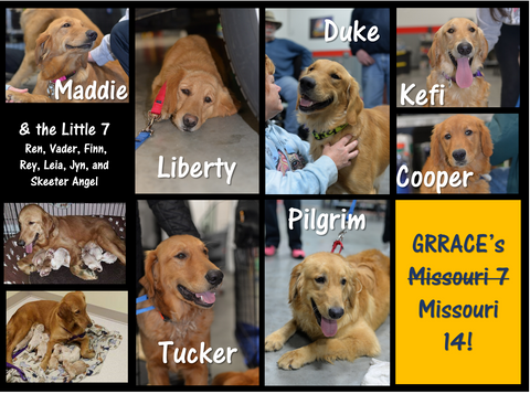 Sponsor A Golden - The Missouri 14!