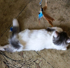 Ari, Gianina's cat, playing with a toy, 'Master of relaxation and stress release'