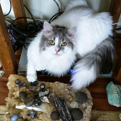 Ari, Gianina's cat, and crystals.
