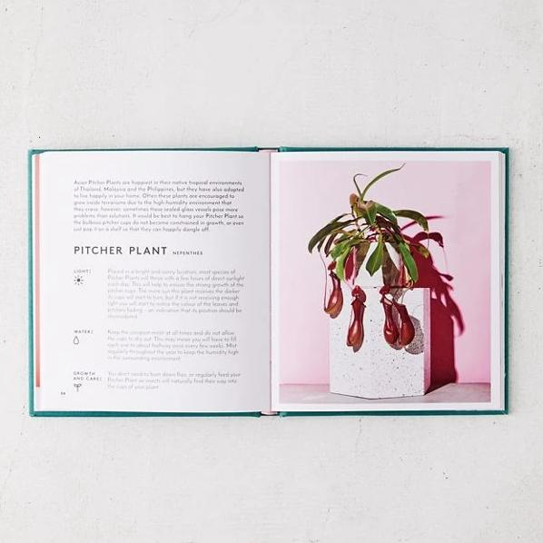 The Little Book of House Plants