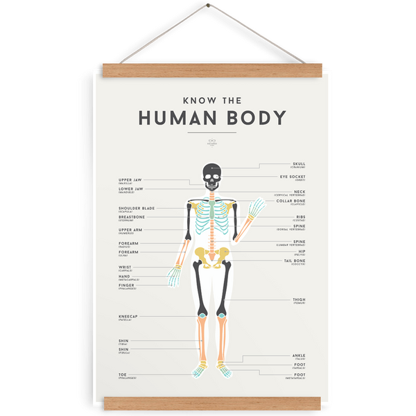 Human Body Chart-Decor-We Are Squared-Tiny Paper Co-Afterpay-Australia-Toy-Store - We Are Squared - Tiny Paper Co. Afterpay Toy Store Australia
