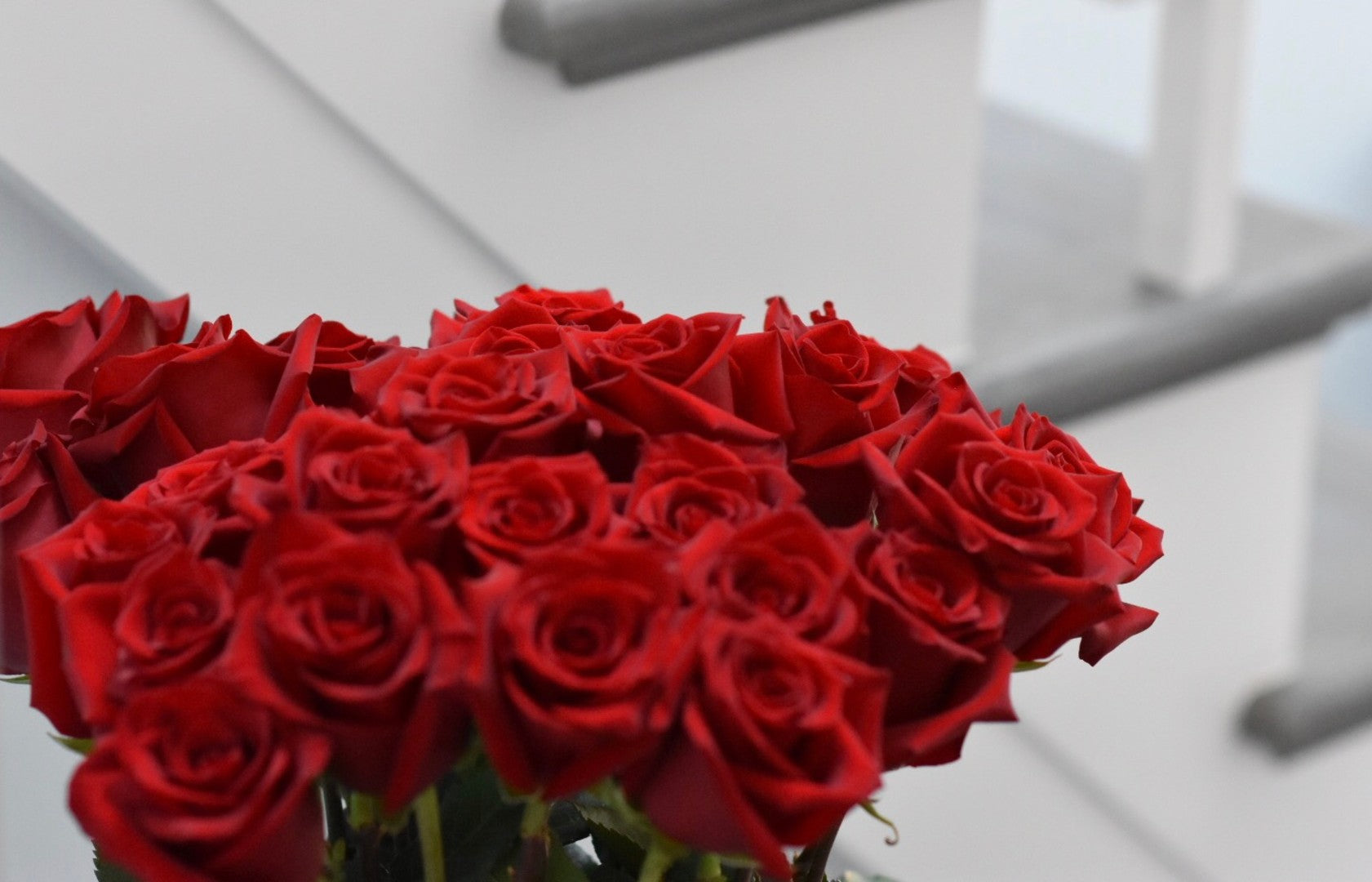 4bc822f079e Long Stem Luxury Roses in a Box | Overnight Delivery in the USA