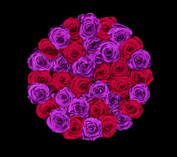 checkered_purple_red