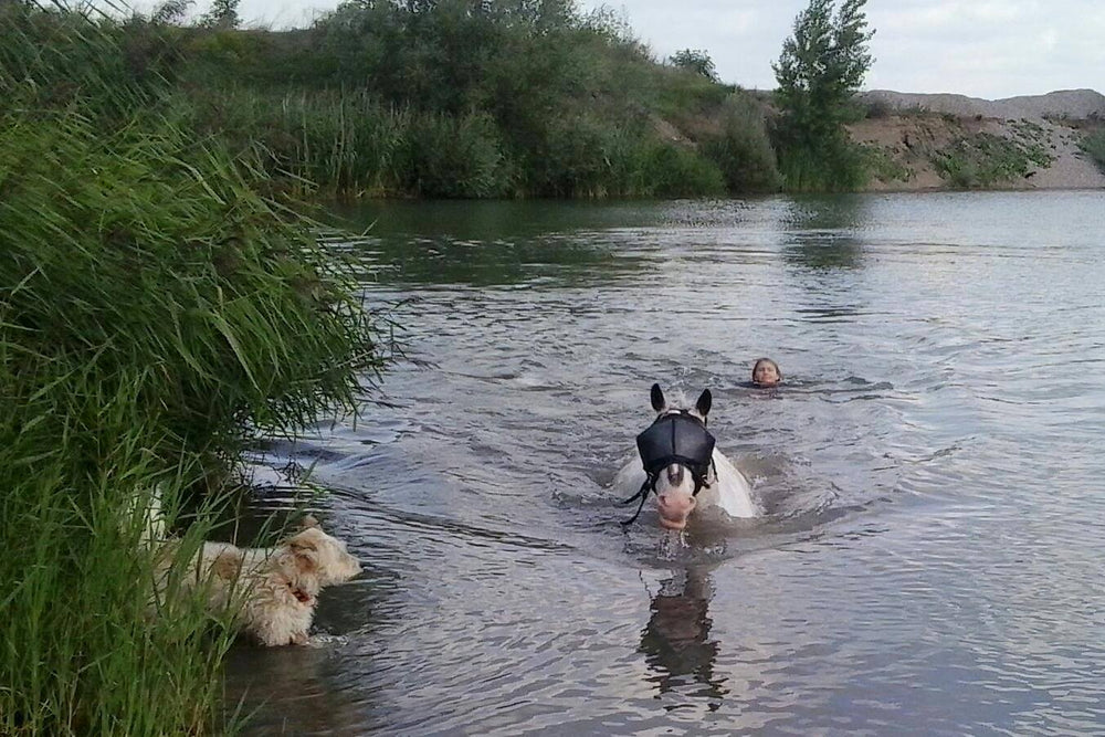 Horse Swimming with the Recovery Vizor