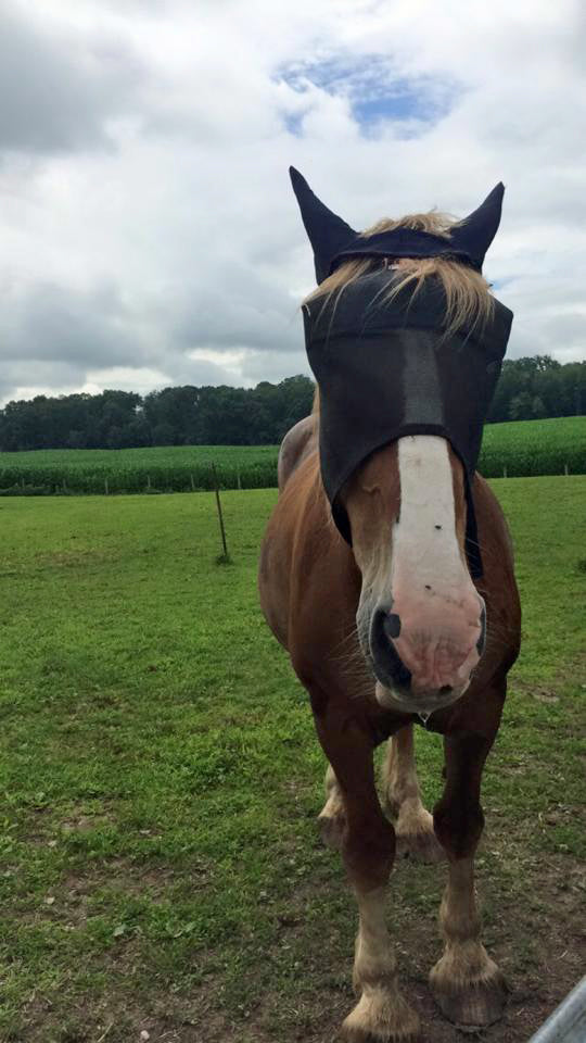 EquiVizor Fly Mask - Protective Pet Solutions