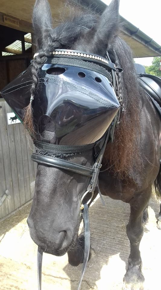 Riding in Recovery Vizor - dark UV tint eye protection for horses