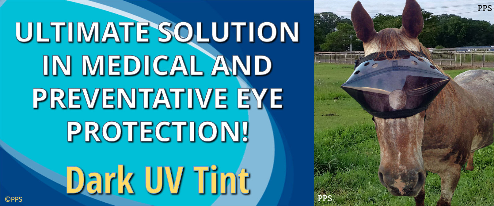 Recovery Vizor for Horses - Ultimate Solution for Eye and Face Protection