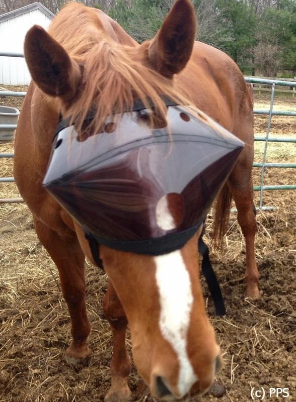 Recovery Vizor  - Medical UV Eye Protection for Horses - Protective Pet Solutions