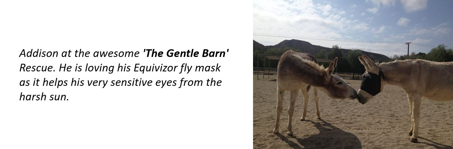 Gentle Barn uses the EquiVizor Fly Mask - Protective Pet Solutions