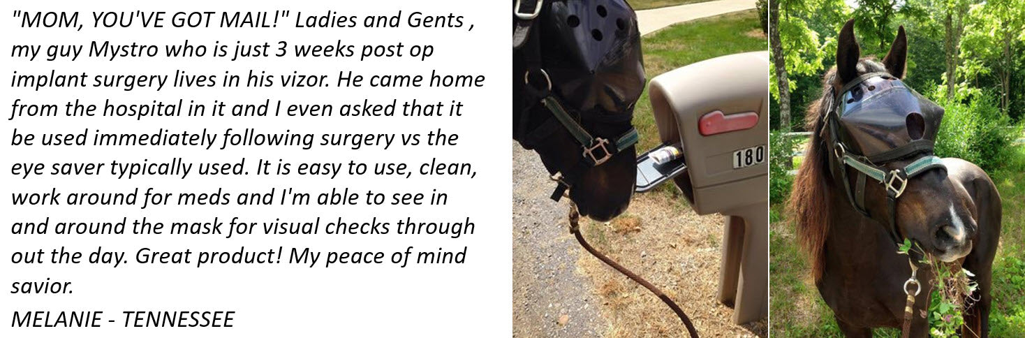 Recovery Vizor for Horses Testimonial - Protective Pet Solutions