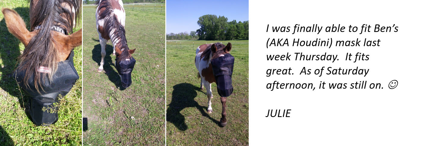 EquiVizor Fly Mask Testimonial - Protective Pet Solutions