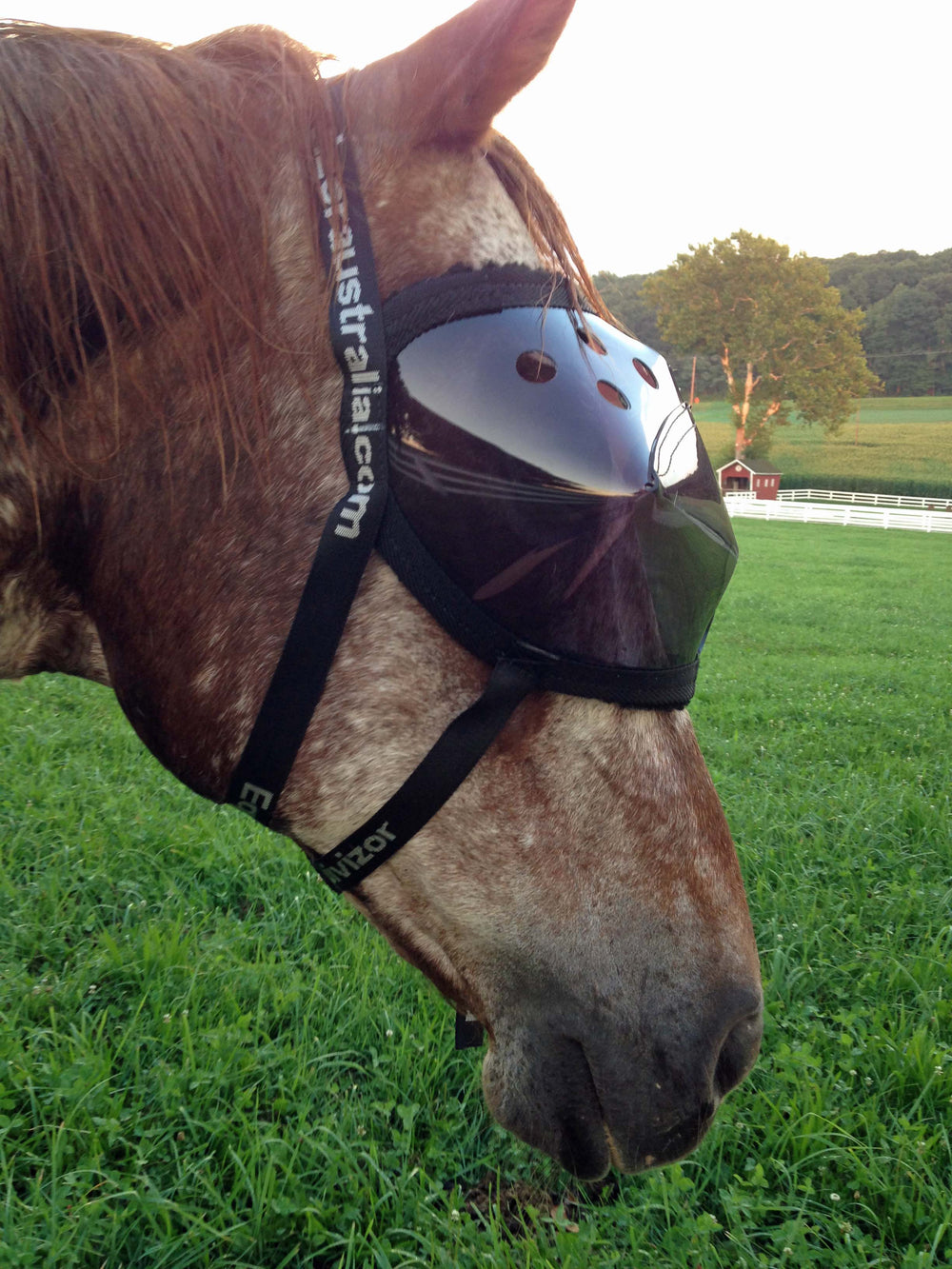 Recovery Vizor Medical UV Eye Protection for Horses