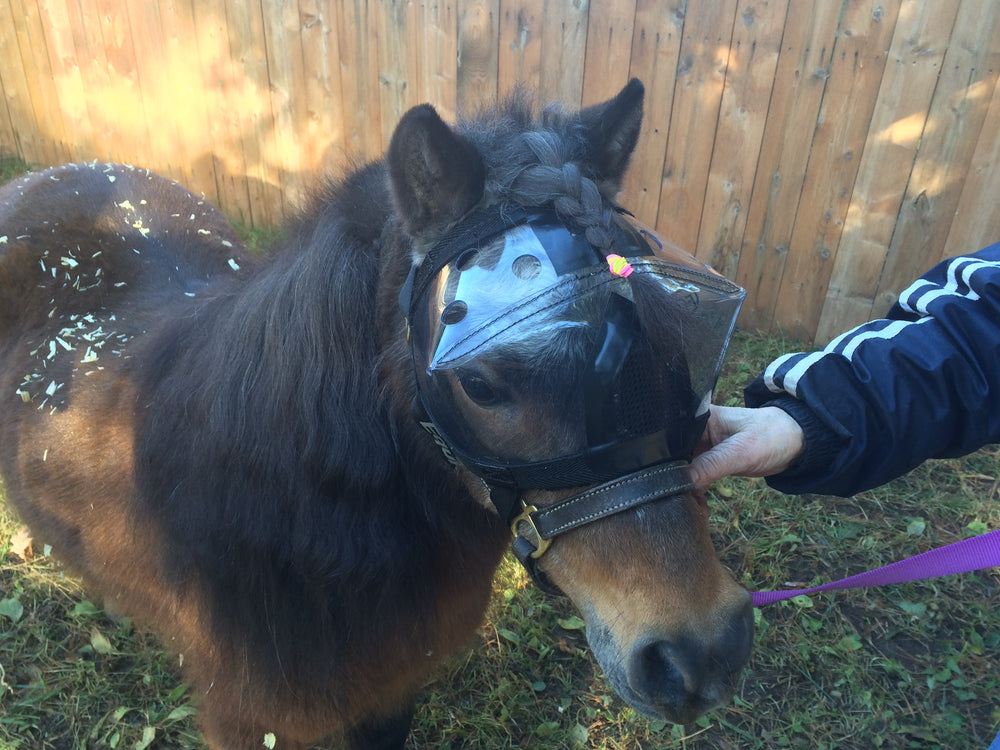 Mini Horse in Recovery Vizor Eye Protection