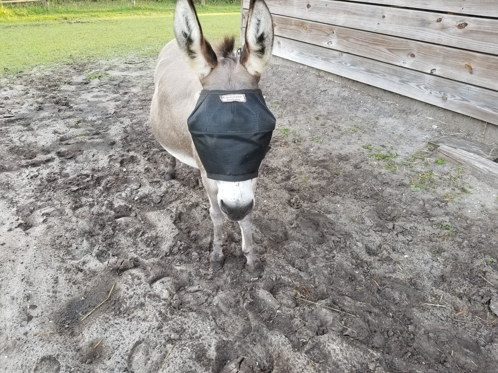 Mini Donkey in EquiVizor Fly Mask - Protective Pet Solutions
